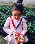 水果采摘商城与您共享收获的喜悦